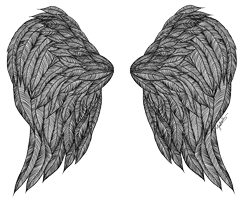 ink drawing wings art print